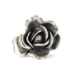 Rose of June